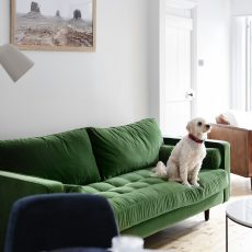 Dog on green couch in home renovation